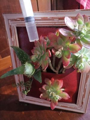 Faire un cadre vegetal3