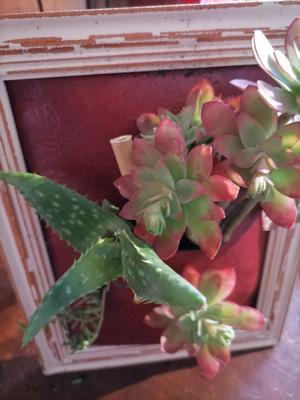 Faire un cadre vegetal4