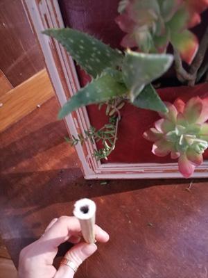 Faire un cadre vegetal5