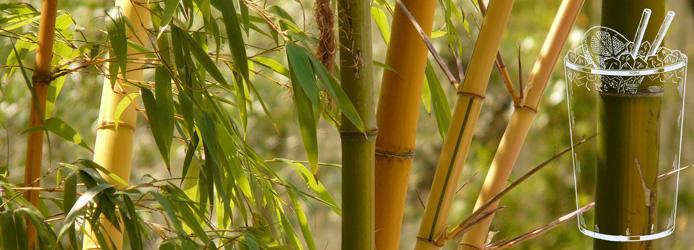 Paille en bambou